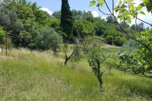 Land_plots_Peani_Tivat_09